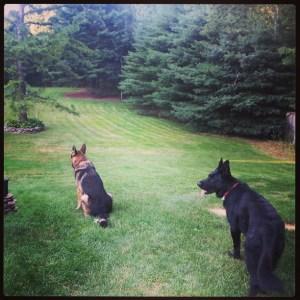 dogsyard